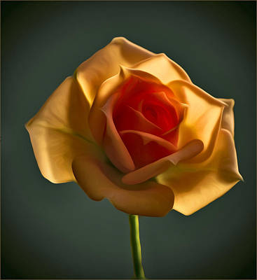 Photograph - Rose-9 by Vladimir Kholostykh