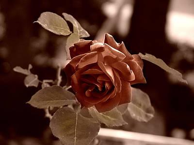 Photograph - Rose by Alessandro Della Pietra