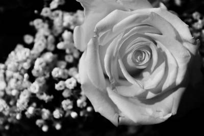 Photograph - Rose And Baby's Breath by Scott Hovind