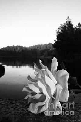Photograph - Rose Awakening by Derya  Aktas