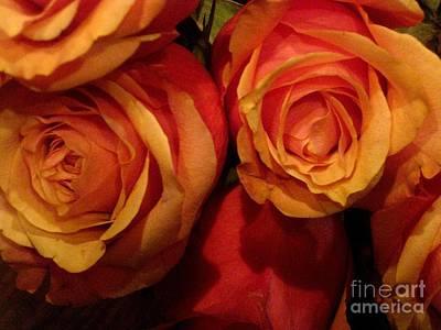 Photograph - Rose Blush by Robert D McBain