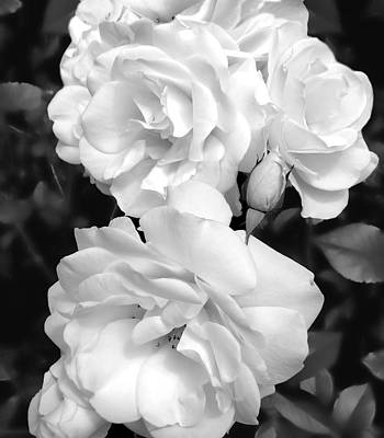 Photograph - Rose Bouquet Black And White by Jennie Marie Schell