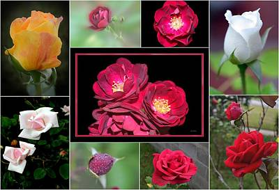 Art Print featuring the photograph Rose Collage 001 by George Bostian