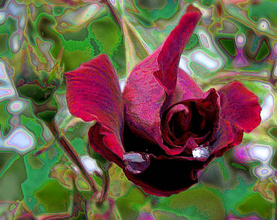 Photograph - Rose Emerging by Lora Fisher