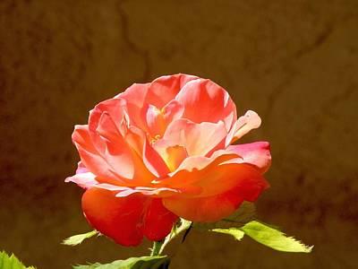 Rose Art Print by FeVa  Fotos