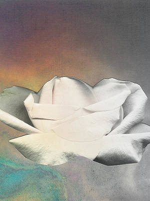 Rose Floating Art Print by George  Page