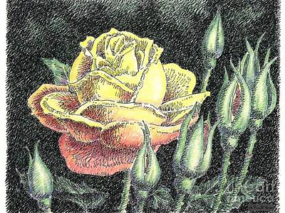 Floral Watercolor Painting - Rose Flower Drawing 4 by Gordon Punt
