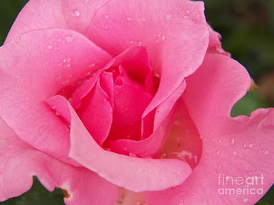 Photograph - Rose Full Of Tears For Mom by Judy Via-Wolff