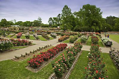 Rose Garden Park Art Print by M K  Miller