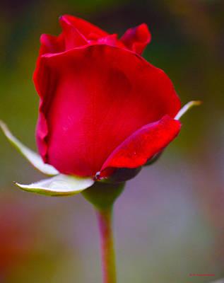 Rose I Art Print by DiDi Higginbotham