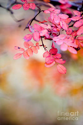 Photograph - Rose In Autumn by Kati Finell