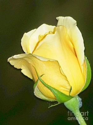 Art Print featuring the photograph Rose Jaune by Sylvie Leandre