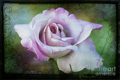 Photograph - Rose by Jim And Emily Bush