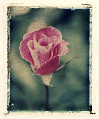 Photograph - Rose by Joe  Palermo