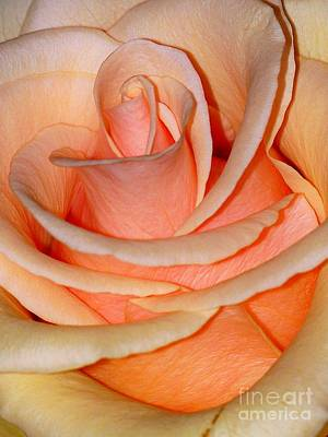 Art Print featuring the photograph Rose by Sylvie Leandre