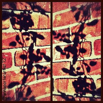 Apple Wall Art - Photograph - Rose Leaves - Shadow On Brick by Anna Porter