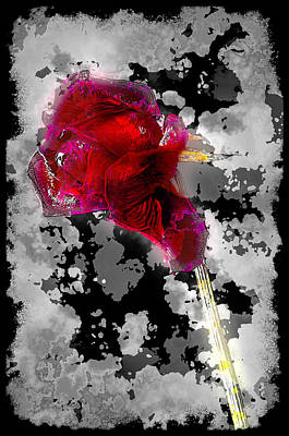 Rose Art Print by Mauro Celotti