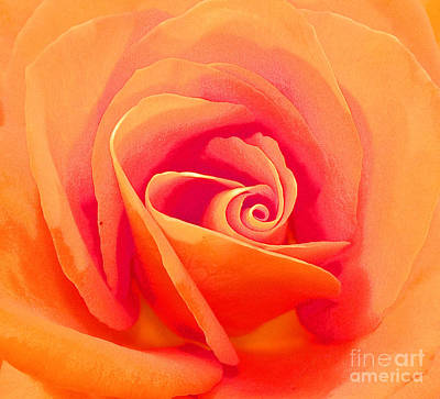 Photograph - Rose Micro 1 by Cindy Lee Longhini