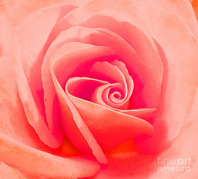 Photograph - Rose Micro 2 by Cindy Lee Longhini