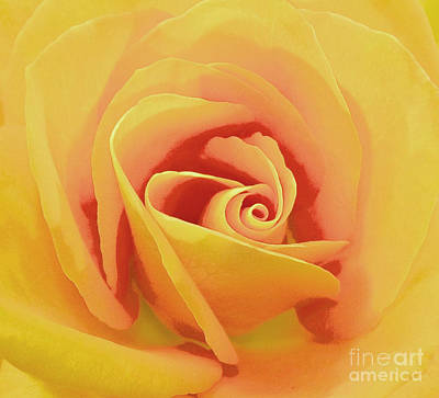 Photograph - Rose Micro 3 by Cindy Lee Longhini