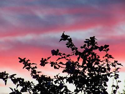 Photograph - Rose Of Sharon Sunset by Judy Via-Wolff