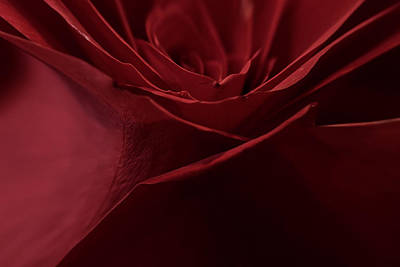 Vintage Uk Posters - Rose Petals by Mitch Shindelbower