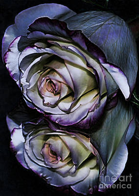 Rose Reflection 2 Art Print by Marianne Troia