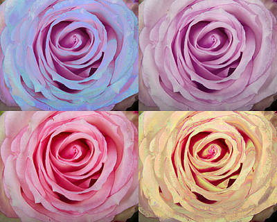 Photograph - Rose Spiral Colorful Mix by James BO Insogna