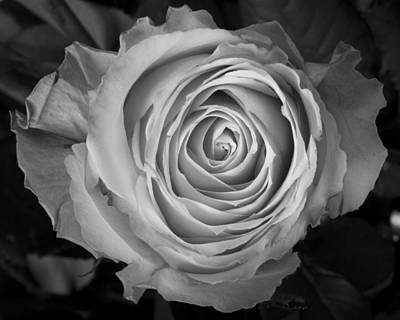Photograph - Rose Spiral by James BO Insogna