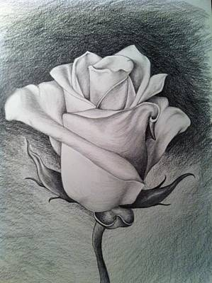 Painting - Rose by Stephanie Reid
