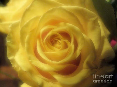 Photograph - Rose Yellow by Tammy Herrin