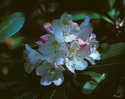 Photograph - Rosebay Rhododendron 3b by Gerry Gantt