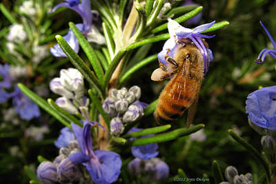Photograph - Rosemary Honeybee by Joyce Dickens