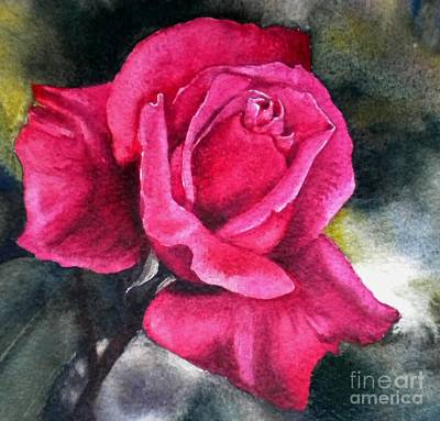 Rosenberger Rosa Family Rosaceae Art Print by Sandra Phryce-Jones