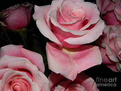 Rose Photograph - Roses by Anita V Bauer