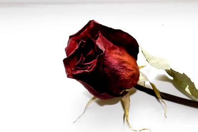 Roses Are Red Original by Sophia Aliesha  Gauthier