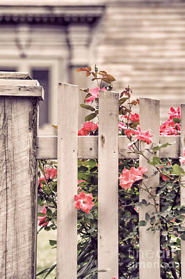 Deerfield Photograph - Roses At The Gate by HD Connelly