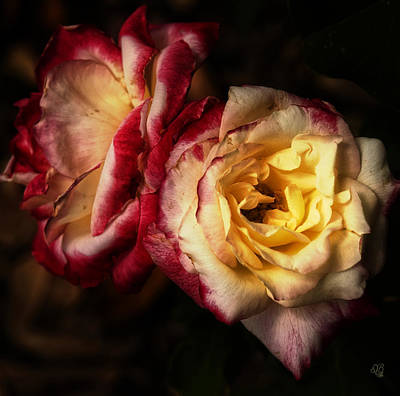 Photograph - Roses By Firelight by Barbara Middleton