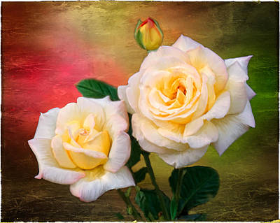 Photograph - Roses by Fred LeBlanc