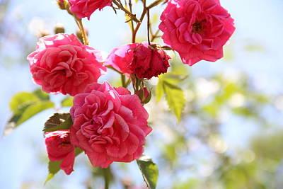Roses Art Print by Gal Ashkenazi