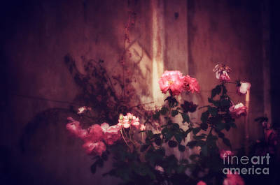 Photograph - Roses In Pink Light by Silvia Ganora