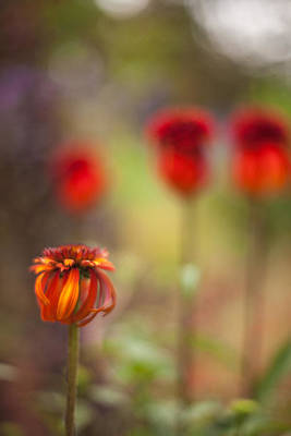 Abstract Flowers Royalty-Free and Rights-Managed Images - Rosso Beauties by Mike Reid