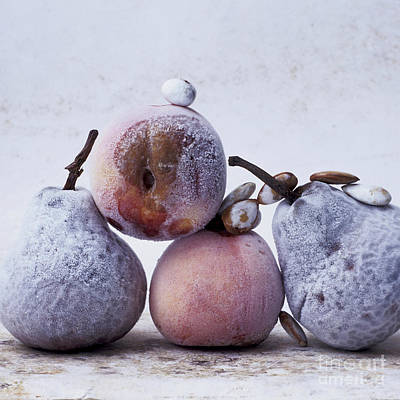 Vitamin-containing Photograph - Rotten Pears And Apple by Bernard Jaubert