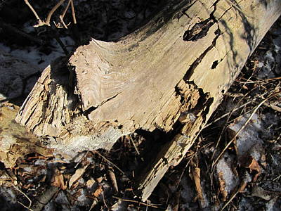 Photograph - Rotting Tree Trunk by Douglas Pike