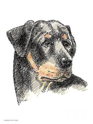 Drawing - Rottweiler-artwork by Gordon Punt