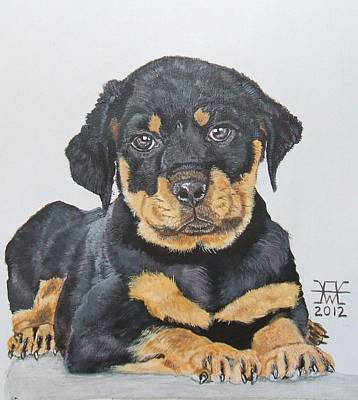 Rotty Painting - Rottweiler Puppy by Alan Wilkinson