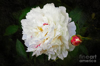Flower Photograph - Rough Around The Edges by Andee Design