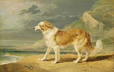 Rough-coated Collie Art Print