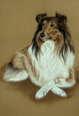 Rough Collie Art Print by Patricia Ivy