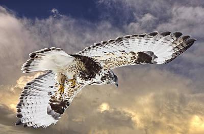 Buzzard Digital Art - Rough Legged Hawk In Flight by Mark Duffy
